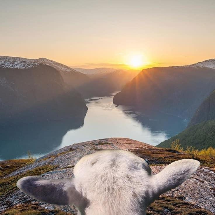 Sommerferie med min mors nye kæreste og et får!