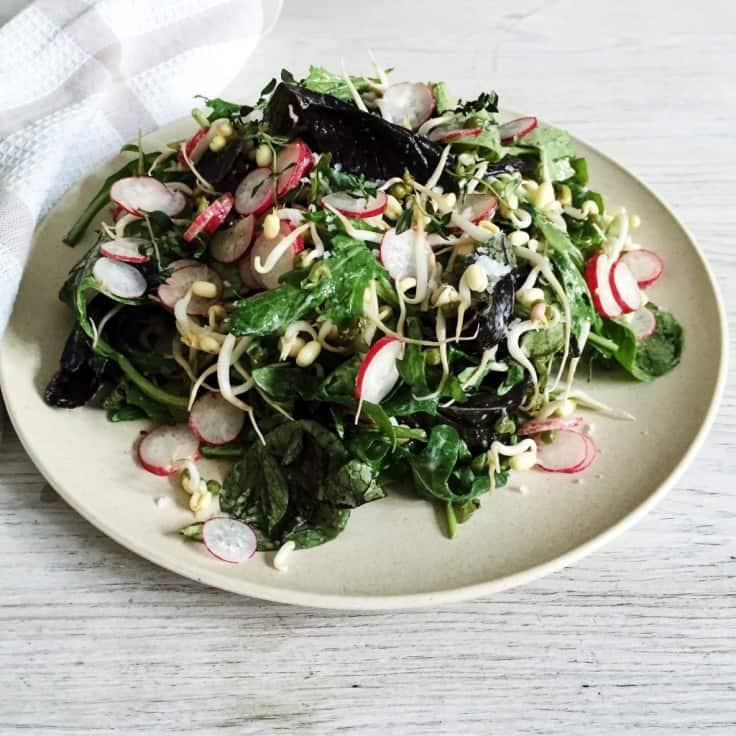 Grøn salat med bønnespirer