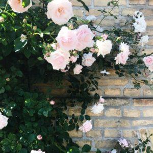 Blomster i Odense