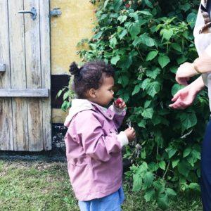 Hindbær og børn