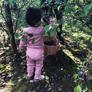 Æblerov