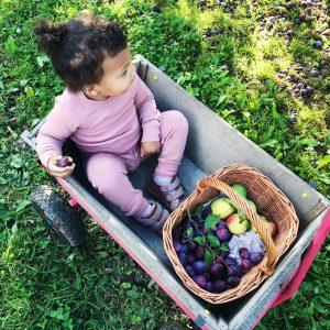 Lindved frugt