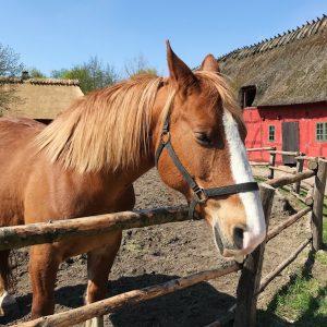 Heste i den fynske landsby