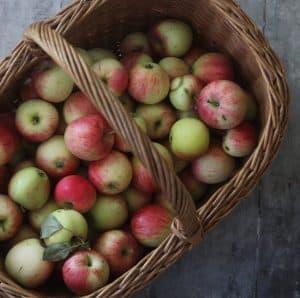 Selvplukkede æbler