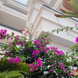Blomster Tenerife