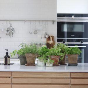 Køkkenhave indenfor